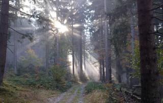 Wandern im Bayerischen Wald - im Herbst