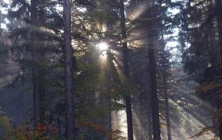 Wanderurlaub - Herbstsonne im Bayerischen Wald
