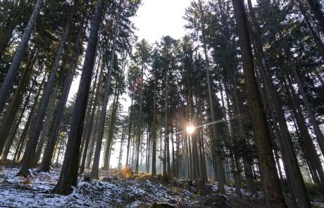 Wanderurlaub Bayerischen Wald - Impressionen