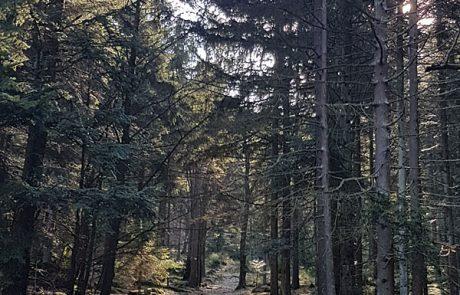 Waldwanderung im Bayerischen Wald