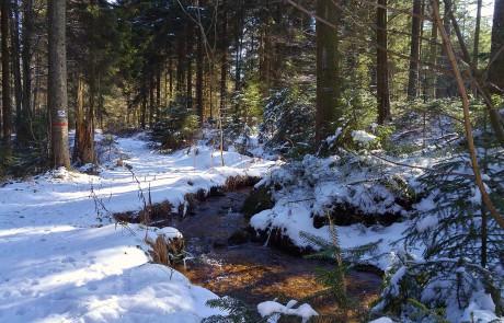 Bachlauf - Wanderung durch den Bayerischen Wald