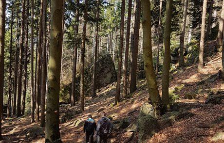 Frühling-Wald im Bayerischer Wald, entdecken Sie die Natur bei Ihrem Wanderurlaub in unserem 4 Sterne Wellnesshotel