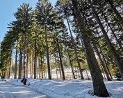 Winter- Wellnessurlaub im 4 Sterne Hotel Bayerischer Wald