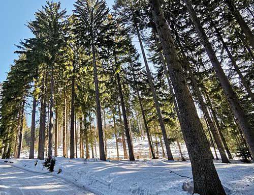 Wintertraum im Bayerischen Wald – Wellnesshotel Zum Bräu