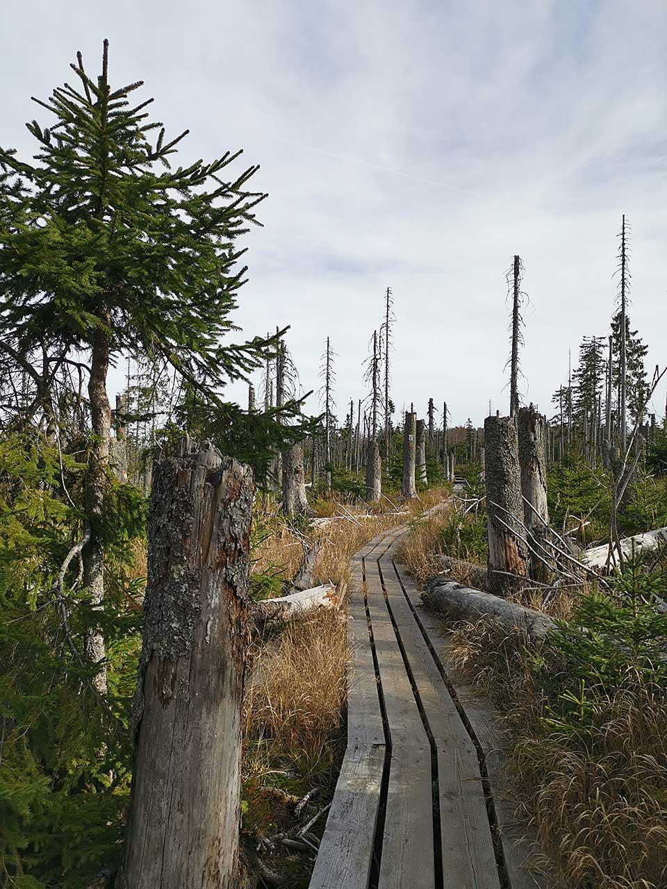 Hochmoor im Bayerischen Wald