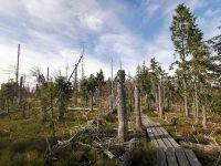 MTB Tour zu den Hochschachten im Bayerischen Wald