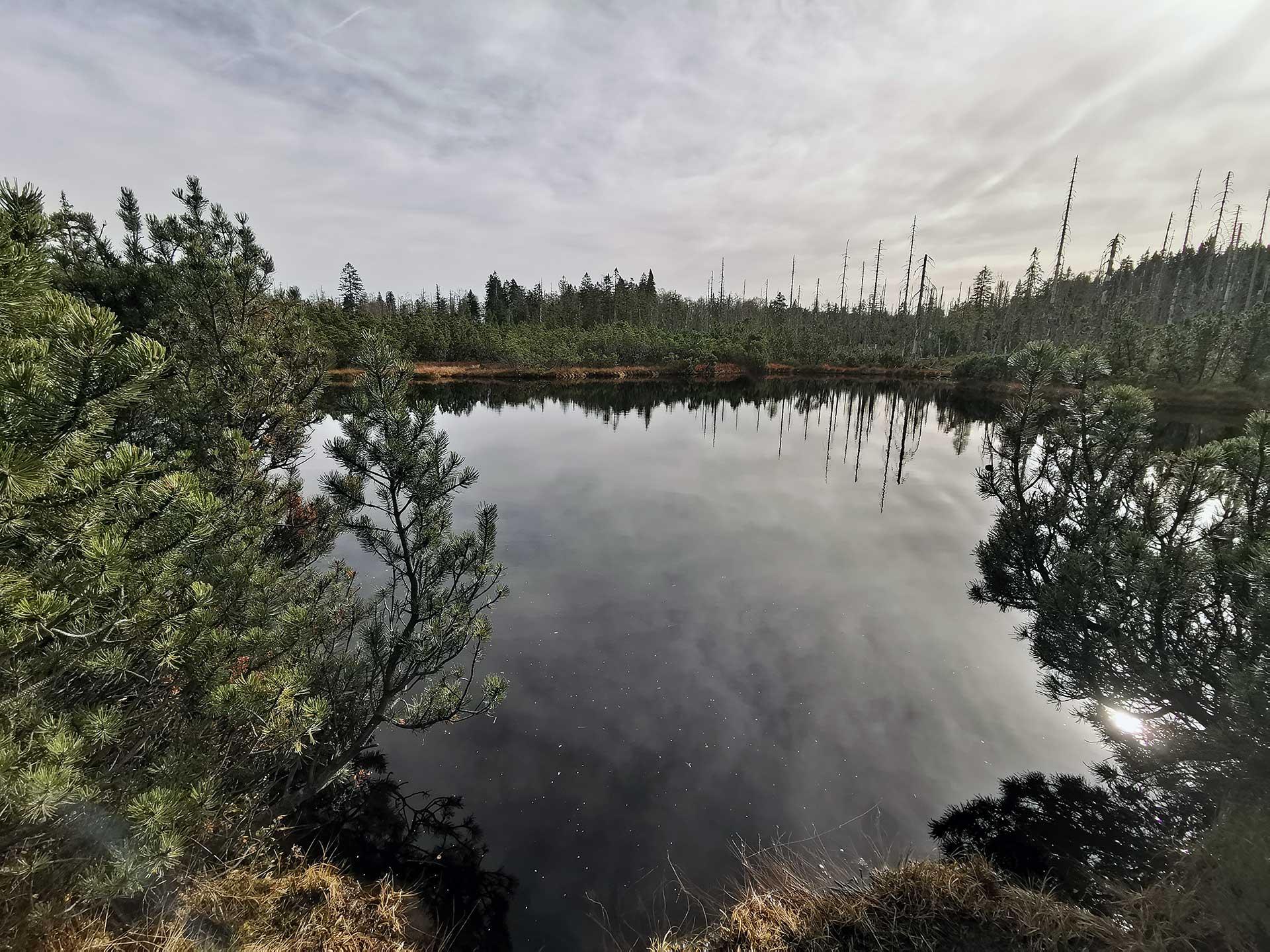 Latschensee in den jhochschachten im Bayerischen Wald