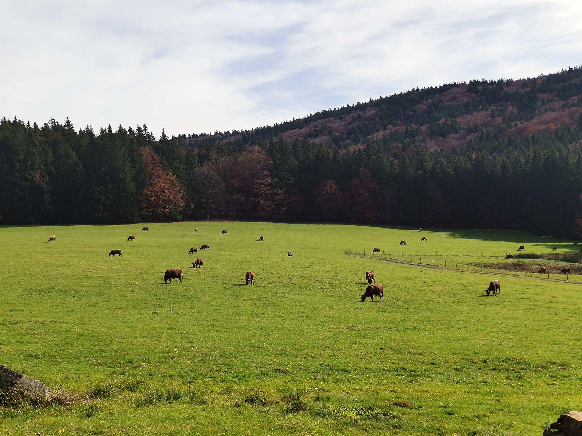 E Mountainbike Tour im Bayerischen Wald