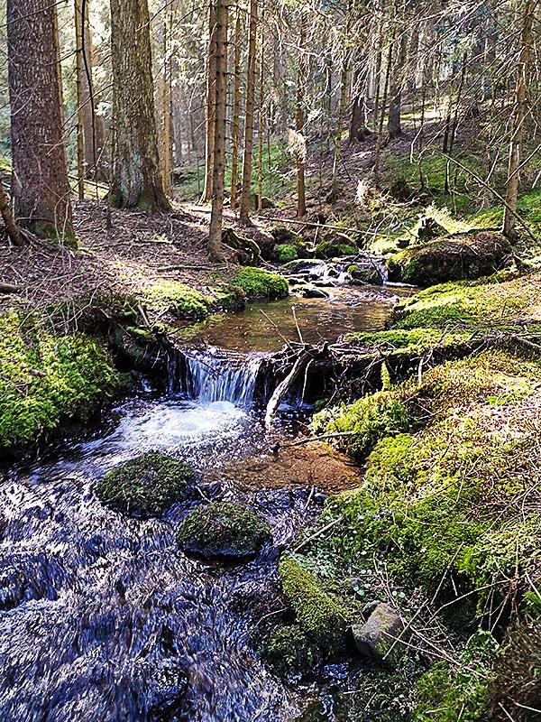 Bachlauf im Bayerischen Wald nahe unseres Wellnesshotel
